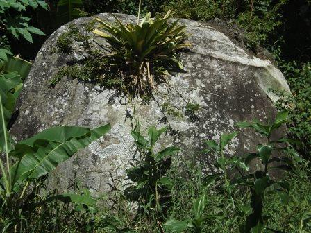 passeio ecologico da crisma 2014 - Serra dos Cavalos (105)