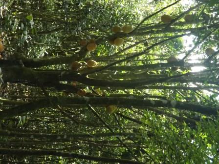 passeio ecologico da crisma 2014 - Serra dos Cavalos (110)