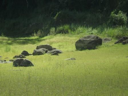 passeio ecologico da crisma 2014 - Serra dos Cavalos (67)
